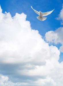 Stellar story post dove in sky